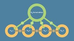 Modell for genflyt hos laks (Bodytext image)