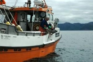 Fisker utenfor Vesterålen