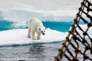 Chasing Ice Grønland