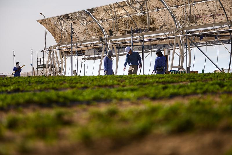 Sahara Forest Project, solceller og avling