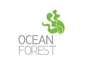 Ocean Forest  (Featureimage)