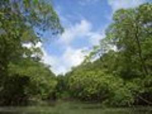 featureimage_rainforest.jpg