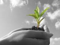 Different bioenergy sectors were present (Frontpage ingress image)