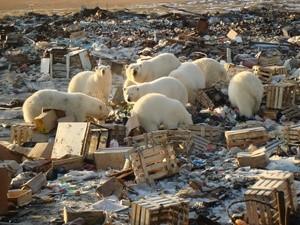 arctic (Ingress image)