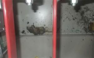 fukushima_rat (Ingress image)