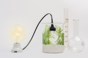 Seaweed Bioenergy