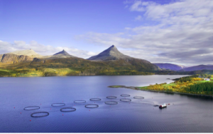 Рибні ферми в Норвегії