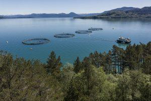 electric aquaculture
