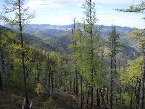 Siberian-taiga-forest