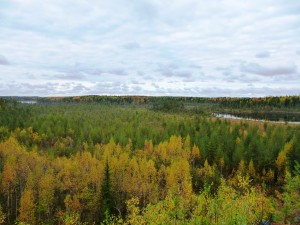 karelian forests