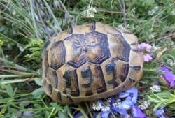 bodytextimage_Nikolskiy-Turtle.jpg