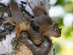 bodytextimage_Udelniy-Park-squirrels.jpg