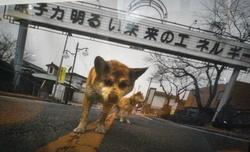 bodytextimage_dogs-1..jpg