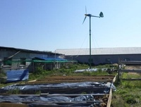 austrich_farm_wind (Frontpage ingress image)