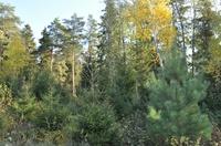 forest (Frontpage ingress image)