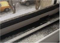 coal dust (Frontpage ingress image)