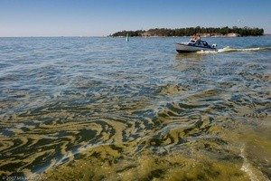 baltic sea most polluted sea blooming (Ingress image)