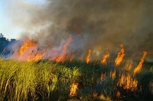 fires (Ingress image)