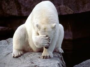 white bear arctic (Ingress image)