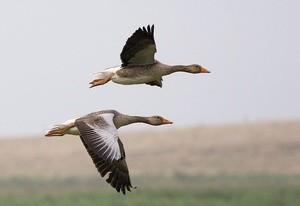 птицы (Ingress image)