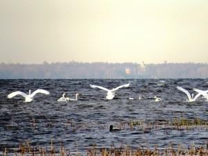 Gulf of Finland (Ingress image)