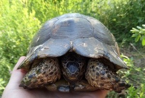 Nikolskiy Turtle (Ingress image)