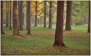 Udelniy Park trees (Ingress image)