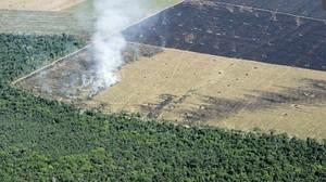 ingressimage_deforestation2.jpg