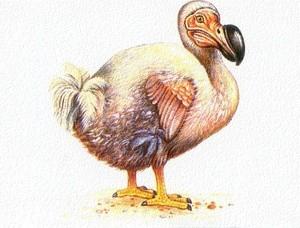 Додо Dodo (Ingress image)