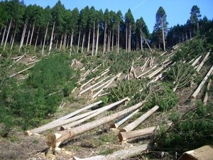 ingressimage_elhlu_hikone_deforestation.jpg