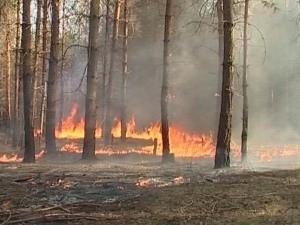Пожары (Ingress image)