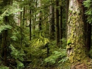 ingressimage_forest300x225.jpg