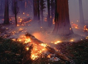 wildfire forest fire лесной пожар (Ingress image)