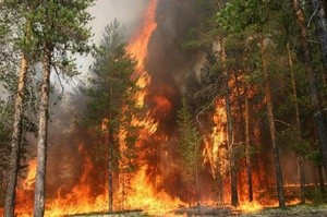 forest fire (Ingress image)