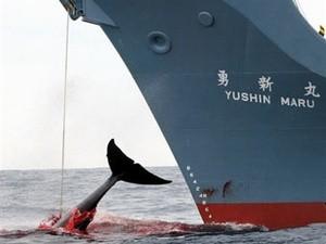 whaler (Ingress image)
