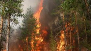 Совсем недавно огненная стихия казалась непобедимой. Пожары охватили сотни тысяч гектаров, наступая на посёлки и туристические базы.
