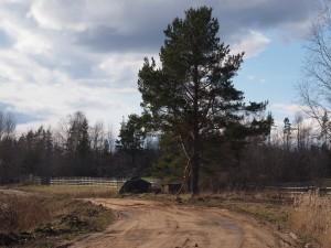 За гигантским забором, периметром 13 километров, разводят оленей и косуль для последующей платной охоты.