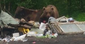 bear[1]
