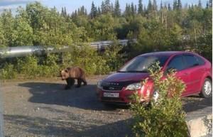 bear1[1]