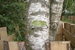 Жители отчаянно протестуют против вырубок лесов в Новой Москве – и обращениями к властям, и самодельными ограждениями вокруг оставшихся деревьев.