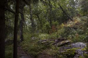 Ural Forest