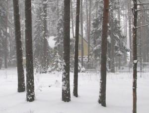 Коттеджная застройка в лесах Ленинградской области