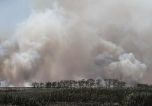 Тростниковый пожар в низовьях реки Бейсуг. Краснодарский край. Сентябрь 2014.