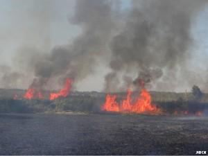 Тростниковый пожар в низовьях реки Бейсуг. Краснодарский край. Сентябрь 2015.