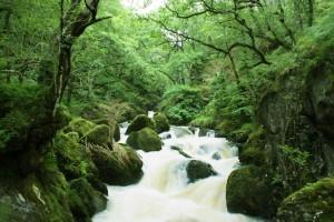 Forest river natural reserve