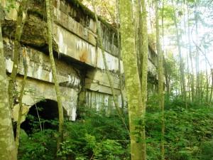 Развалины открытой 12-дюймовой батареи заросли лесом.
