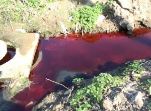 Noviy Svet Blood