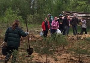 Активисты сажают елочки на месте вырубок «Сити 78»