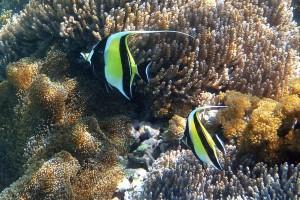 underwater ocean coral fish
