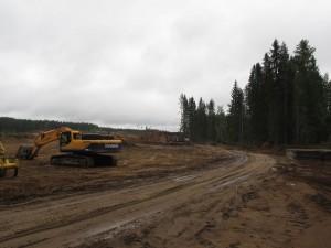 Рубка леса в районе поселка Ильичево в Выборгском районе.